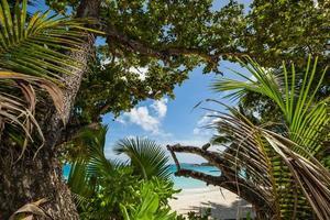 jungle op het strand foto