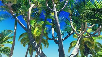 weelderige vegetatie in de jungle foto