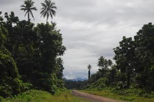 grindweg in oerwouden Papoea-Nieuw-Guinea
