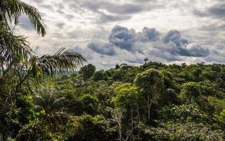 landschap van de jungle in cuyabeno wildreservaat. foto