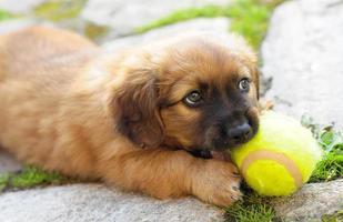 kleine pup foto