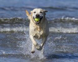 hond spelen op strand foto
