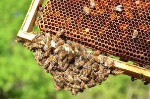 bijen op honingraat