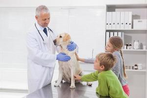 dierenarts die een hond met zijn eigenaars onderzoekt foto