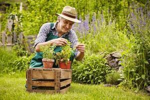 tuinman beoordeling zaailingen tuin foto