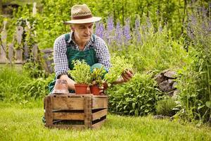 man krat tuinieren foto