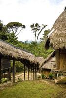 jungle hut foto