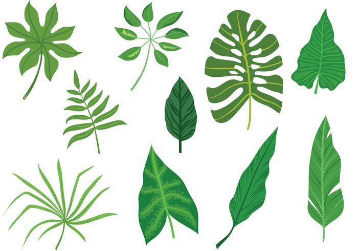 Free-tropische-blad-vectoren vector