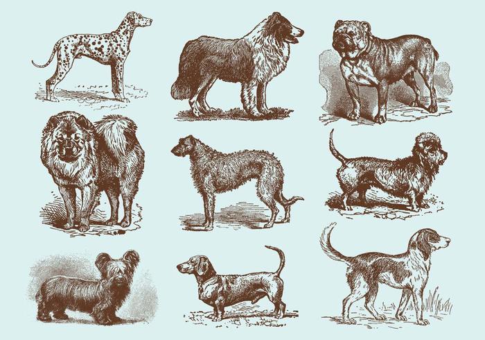 Oude Stijl Tekening Dog Vectoren