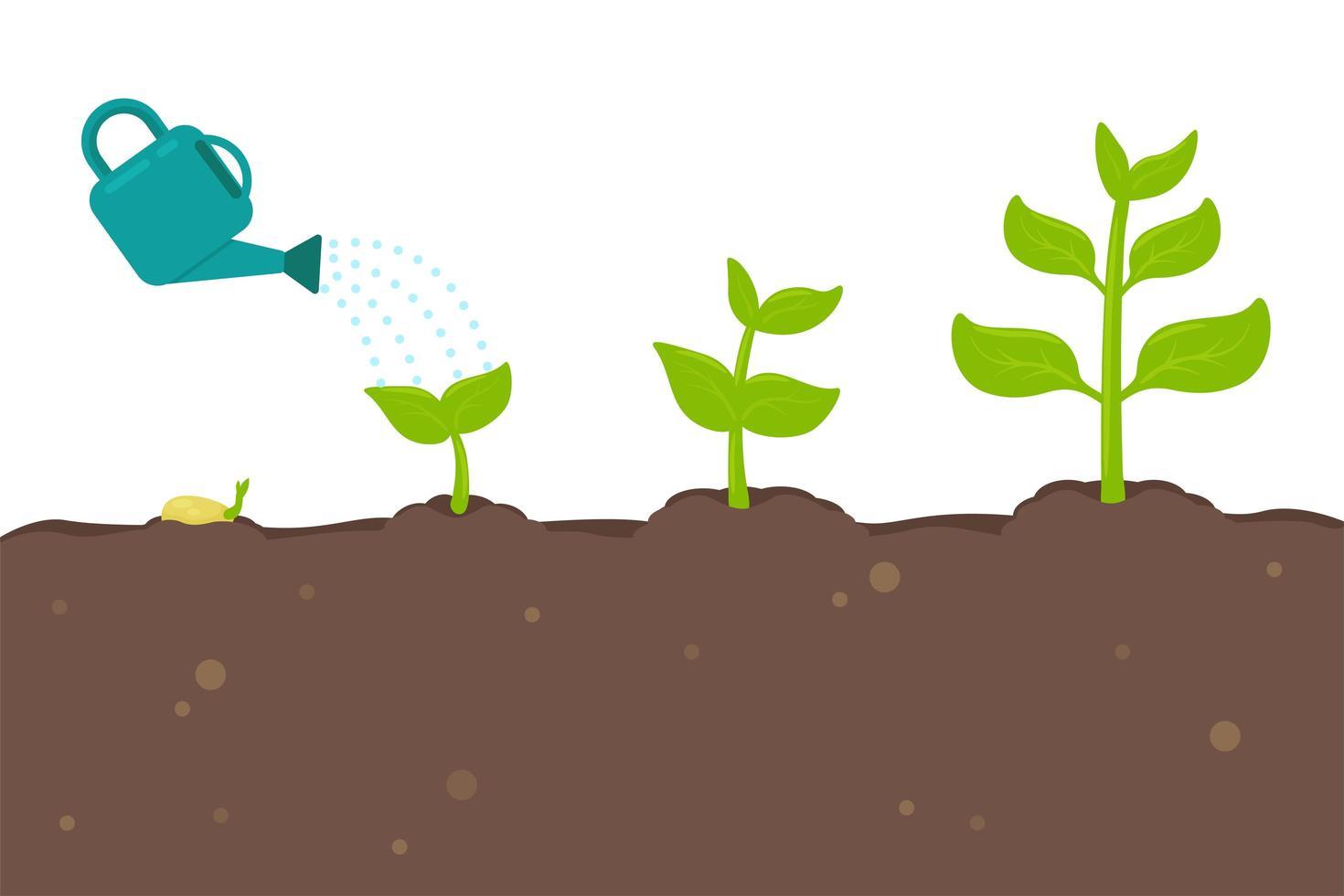 planten die uit zaden ontkiemen vector