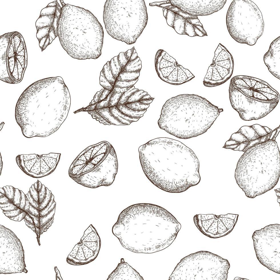 citroen hand getekend naadloos patroon vector