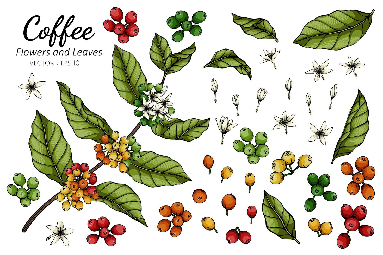 koffie bloemen en bladeren tekenen vector