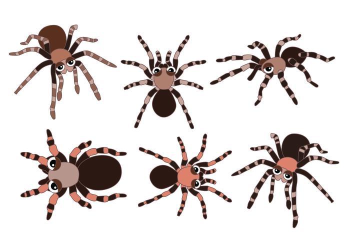 Tarantula vectoren