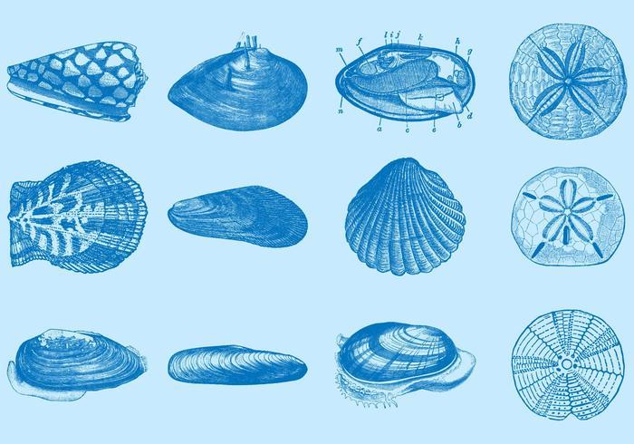 Zeeschelpen vector