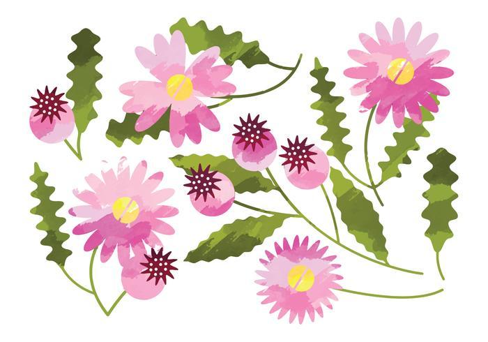 Vector Waterverf Daisy Flower Elements