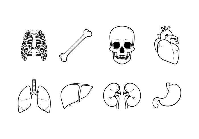Gratis Menselijke Interne Organen Vector