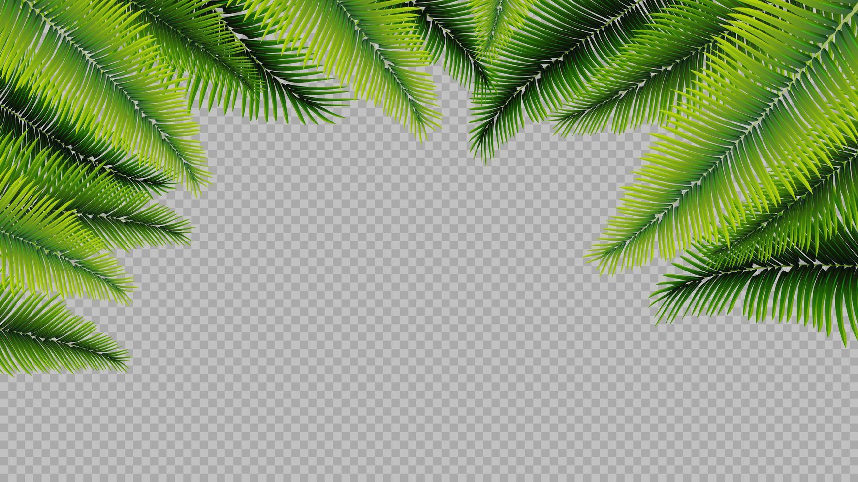 frame gemaakt van palmbladeren in een realistische stijl vector