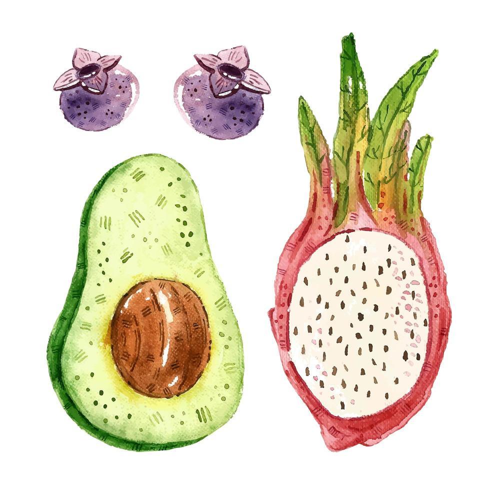 avocado, bosbes, pitahaya, drakenfruit aquarel set vector