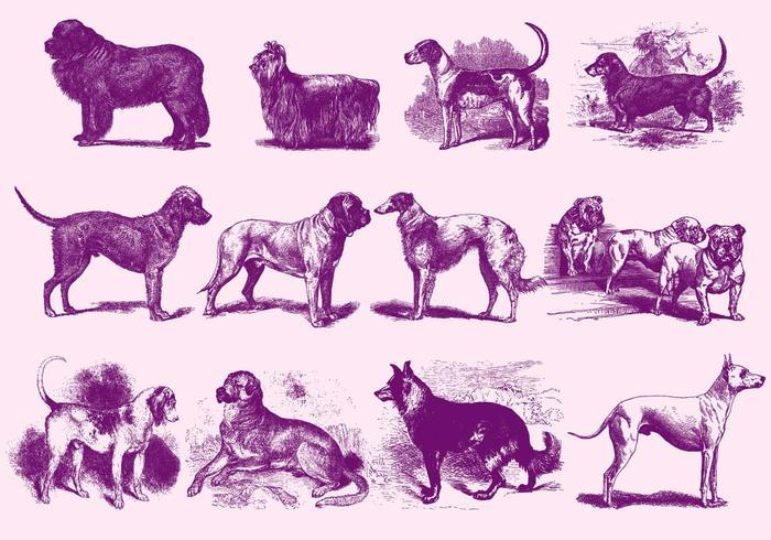 Vintage Paarse Illustraties van de Hond vector