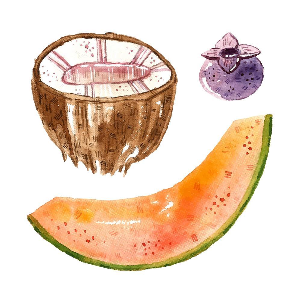 kokos, meloen, bosbes. vector