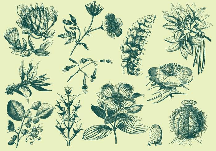 Groene Exotische Bloemillustraties vector