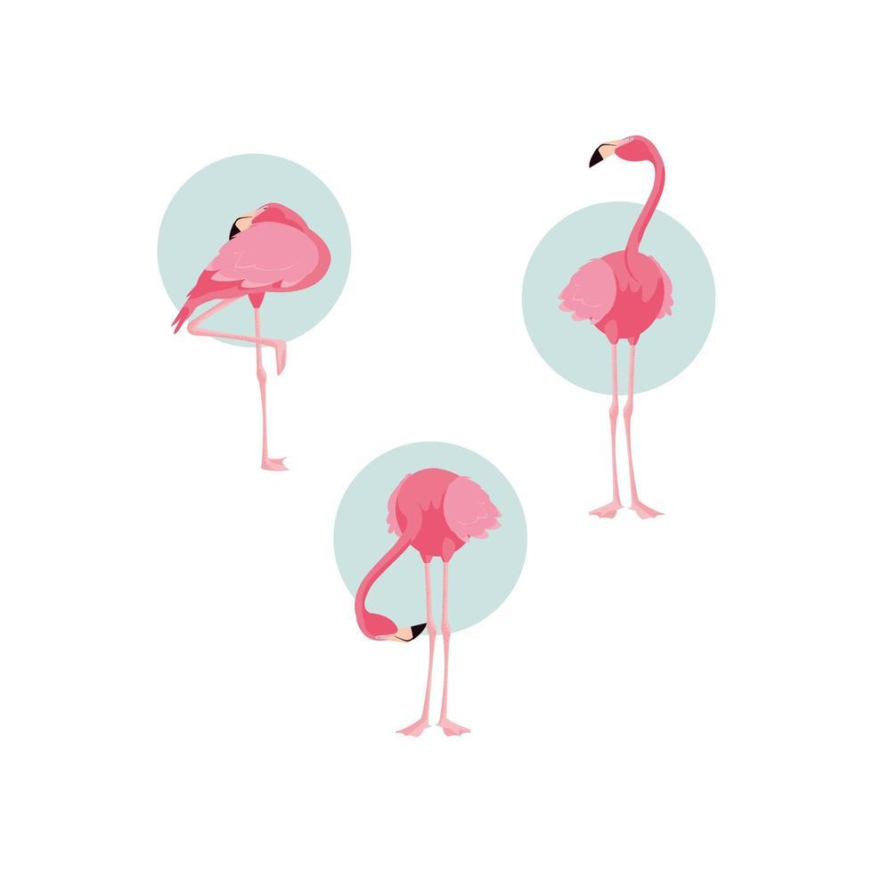 mooie staande zwerm flamingovogels vector