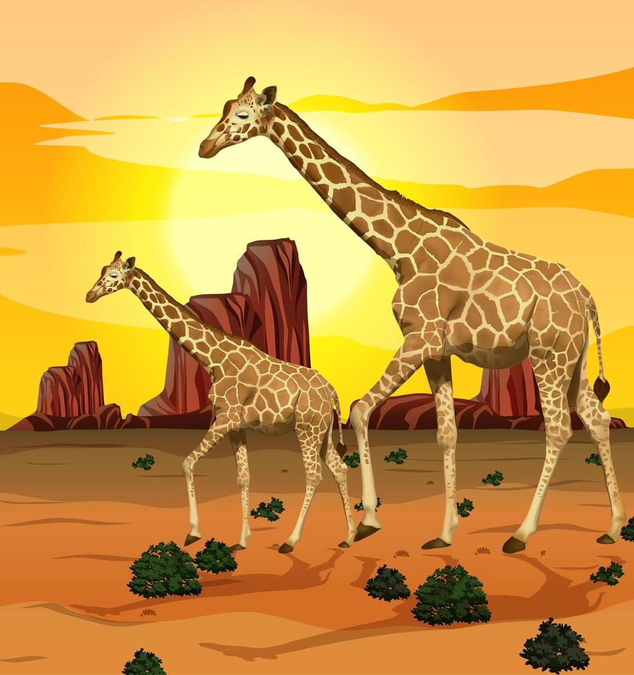 giraffen op de savanne grasland achtergrond vector