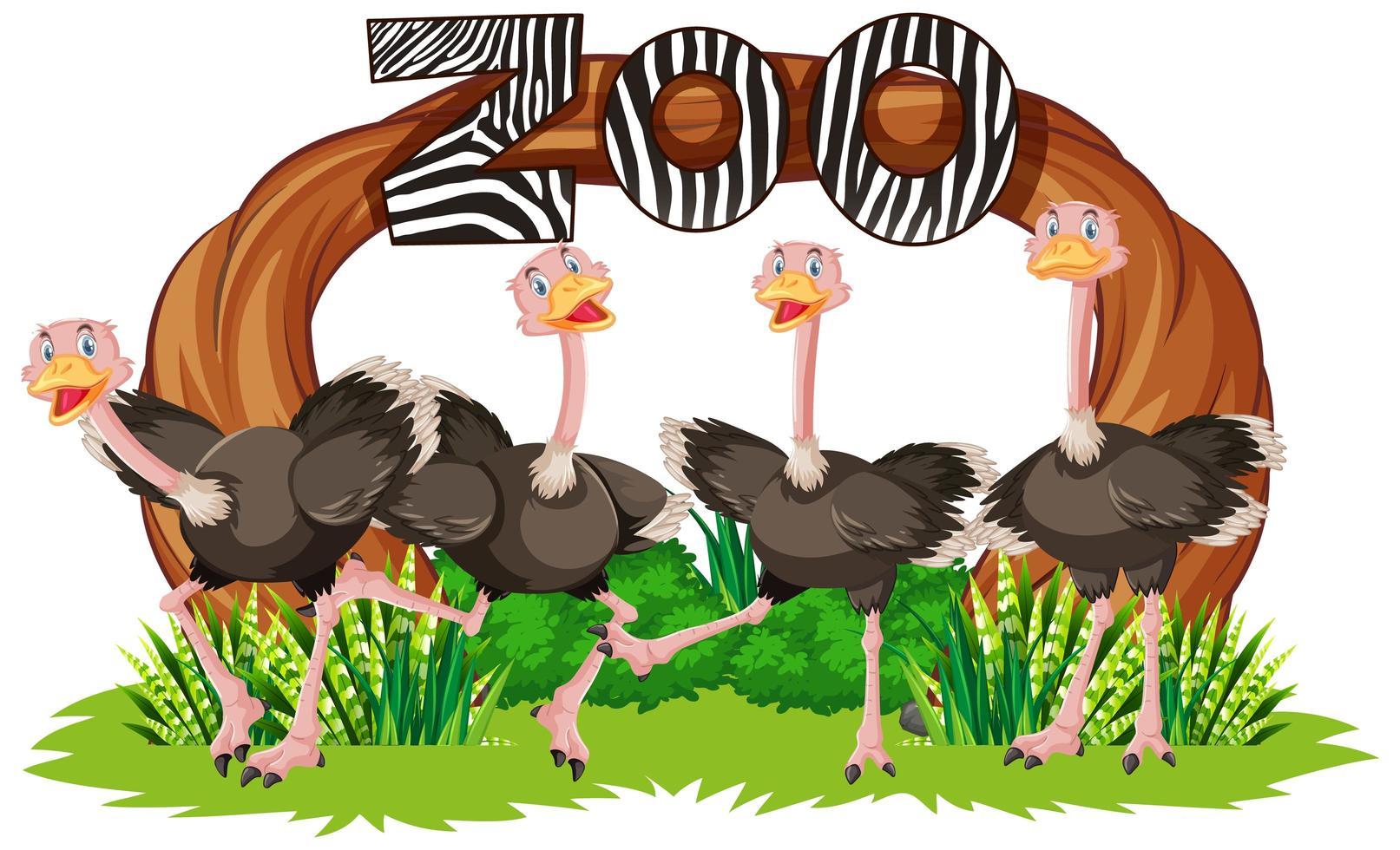 struisvogel voor dierentuinbanner vector