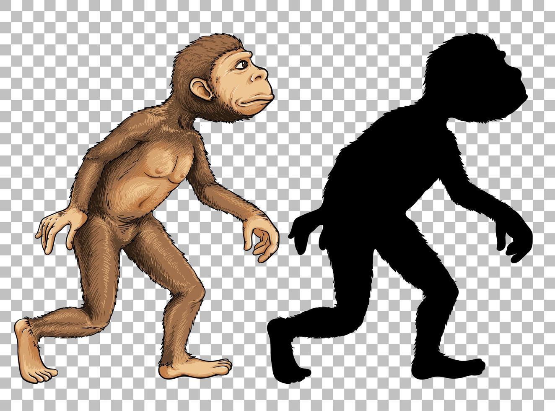 set van aap en silhouet vector