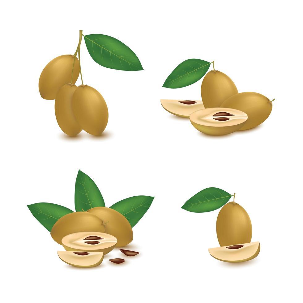 realistische sapodilla-fruitset vector