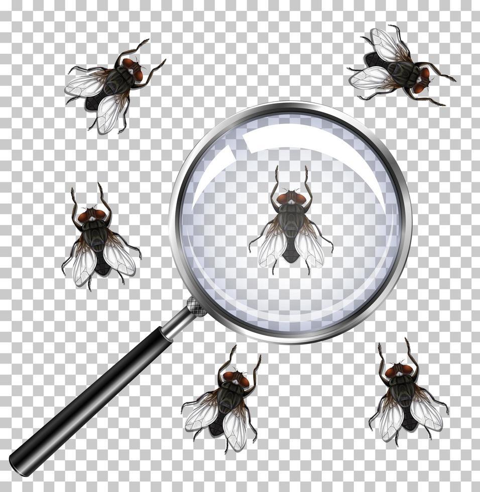 vliegeninsecten met vergrootglas geïsoleerd op transparant vector