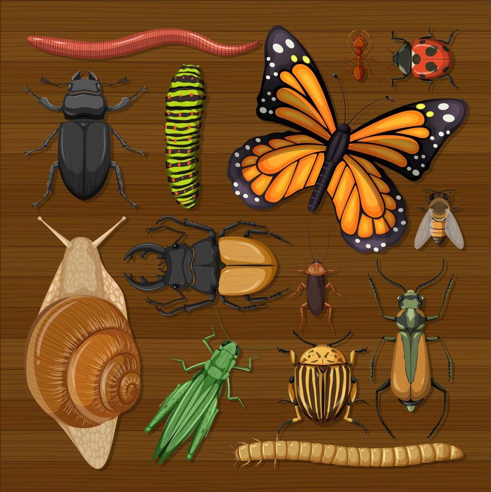 set van verschillende insecten op houten behang vector
