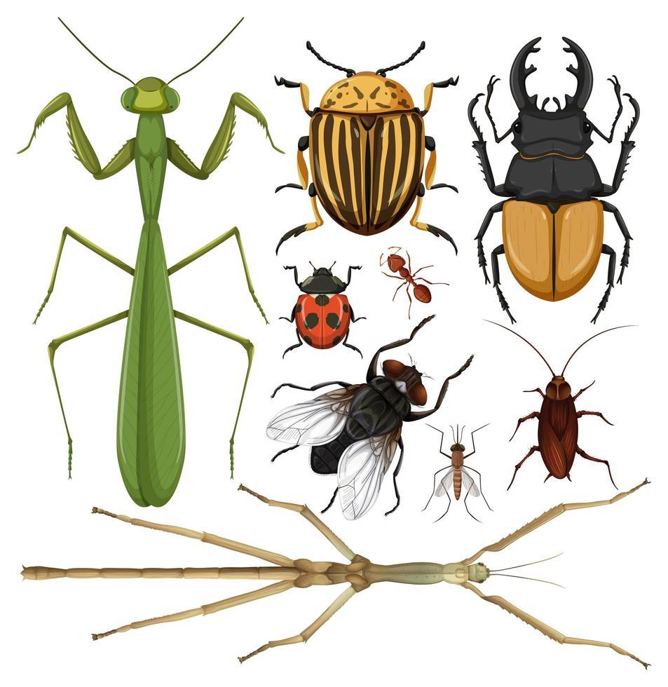 set van bugs vector