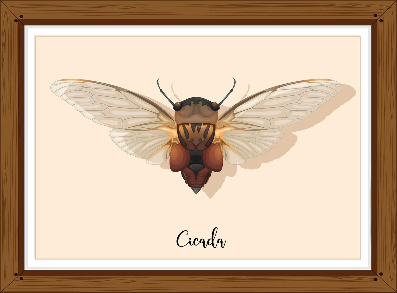 cicade op houten frame vector