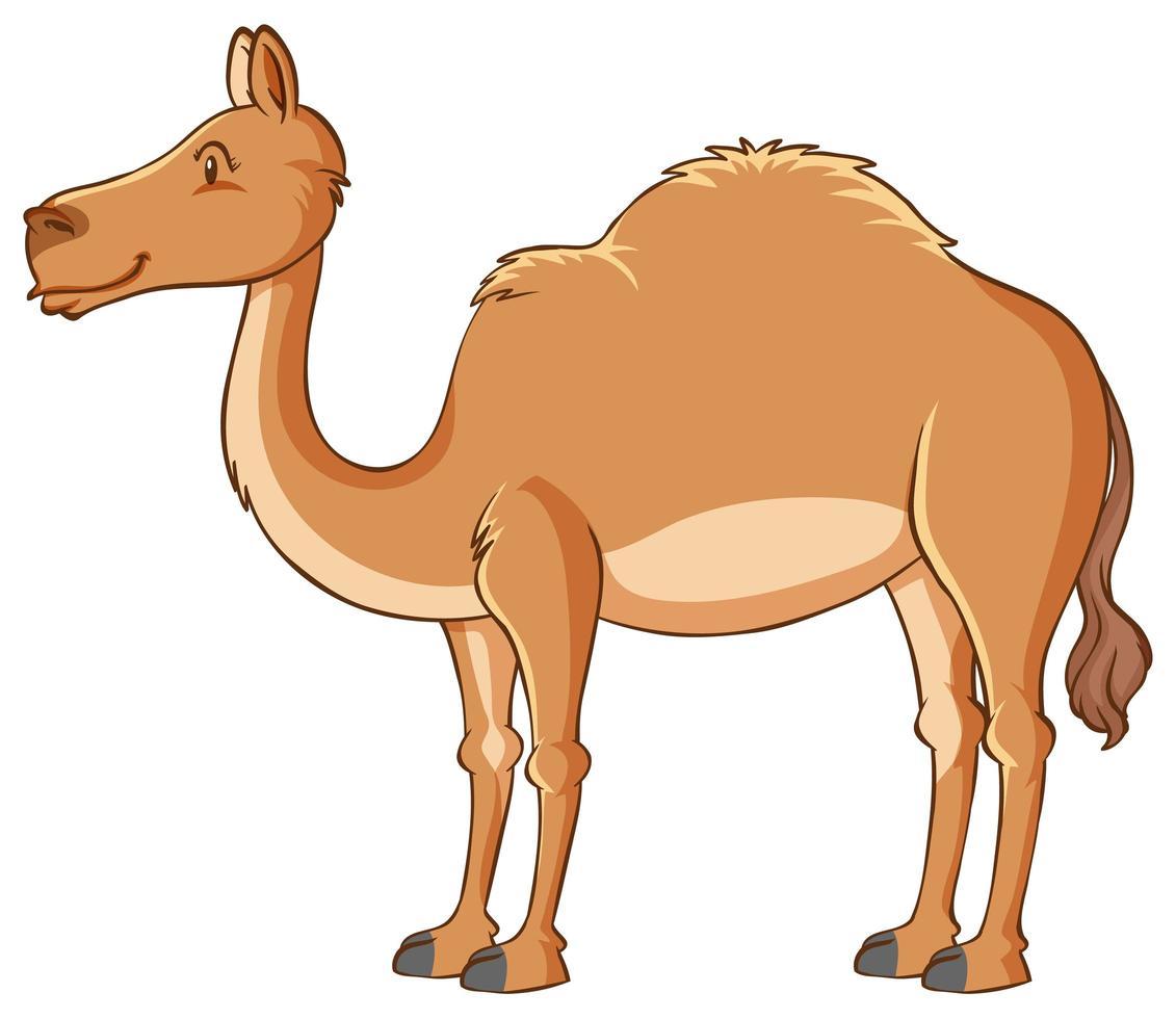 geïsoleerde kameel op witte achtergrond vector