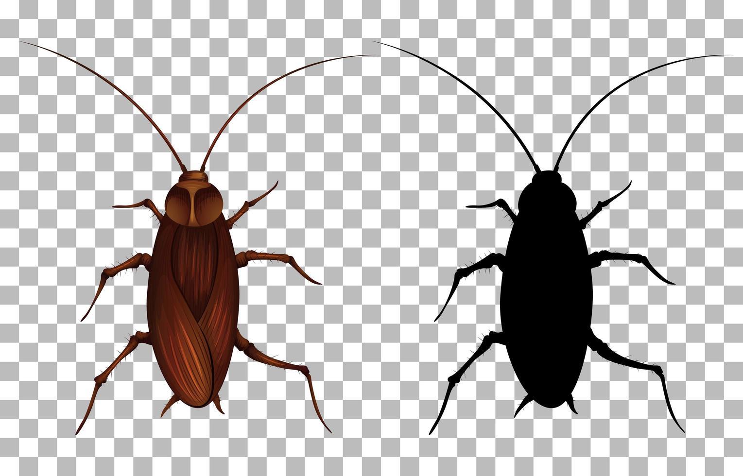 kakkerlak met zijn silhouet vector