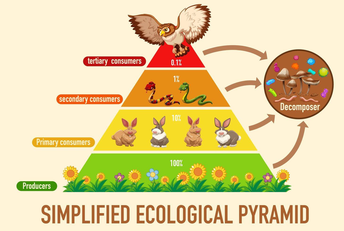 wetenschap vereenvoudigde ecologische piramide vector