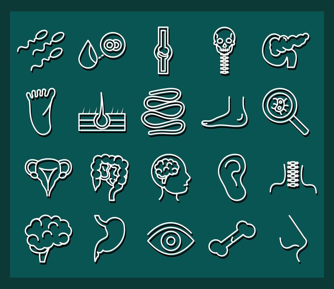 menselijk lichaam anatomie en gezondheid pictogramserie vector