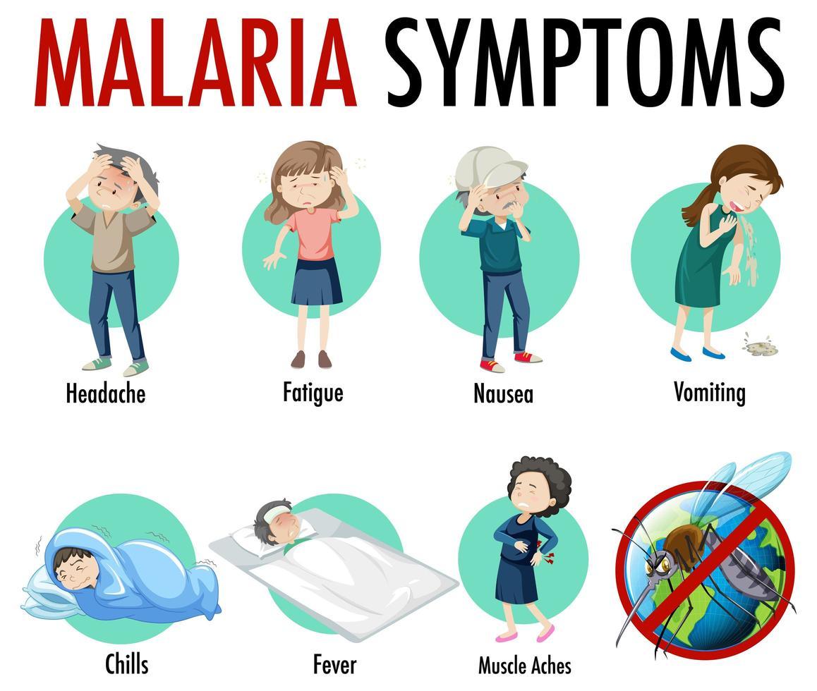 malaria symptoom informatie infographic vector