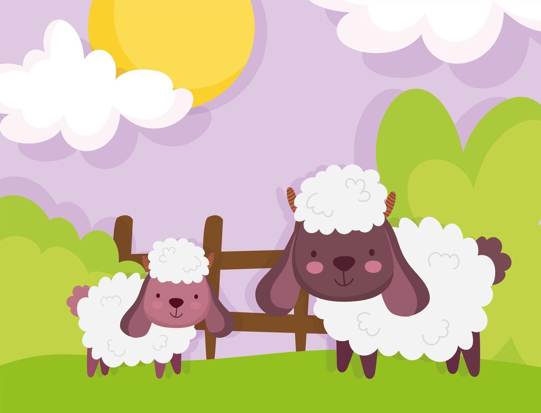 schattige schapen in een boerderij vector