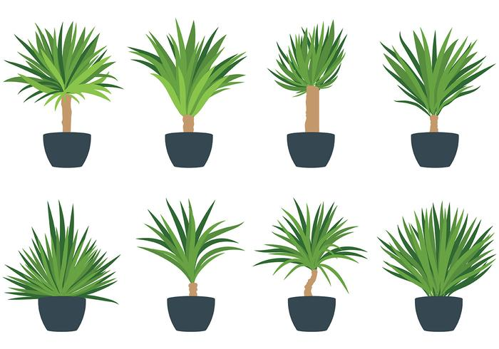 Gratis Yucca Icons Vector