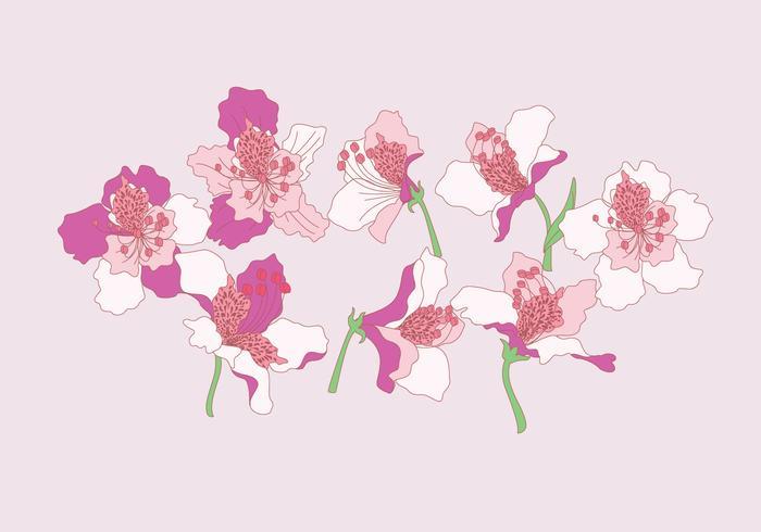 Rhododendron Bloemen Vector