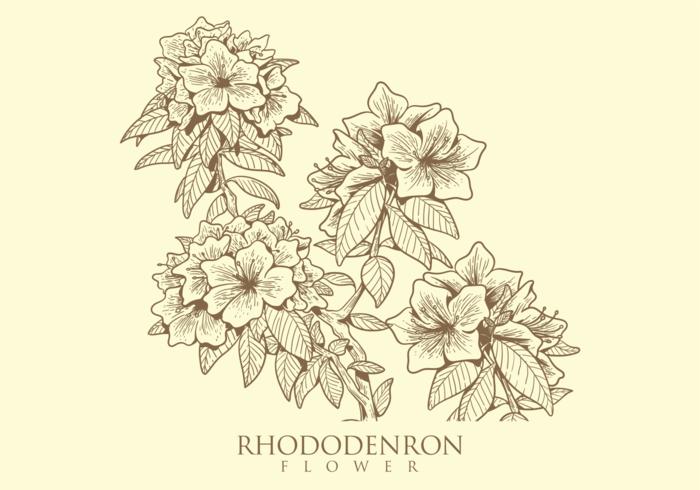 Gratis Hand Drawn Rhododendron Flower Vectoren