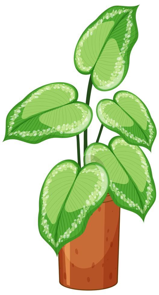 plant in pot met bodem geïsoleerd op een witte achtergrond vector