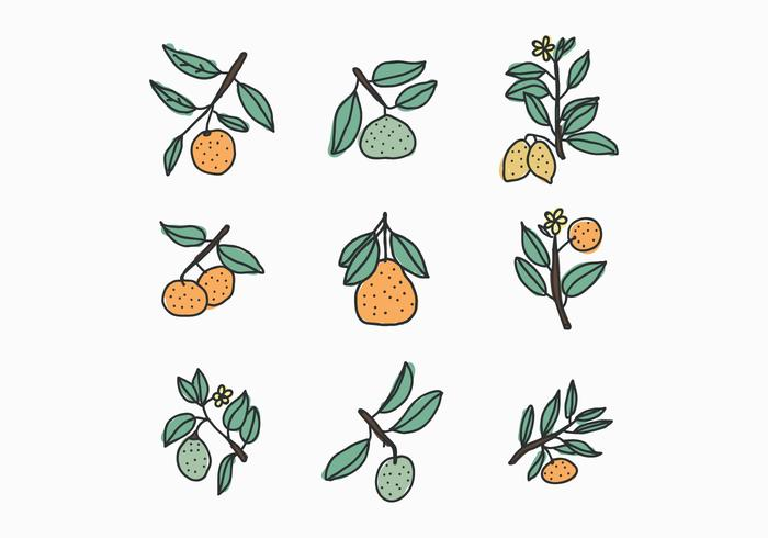 Citrusdoodles vector