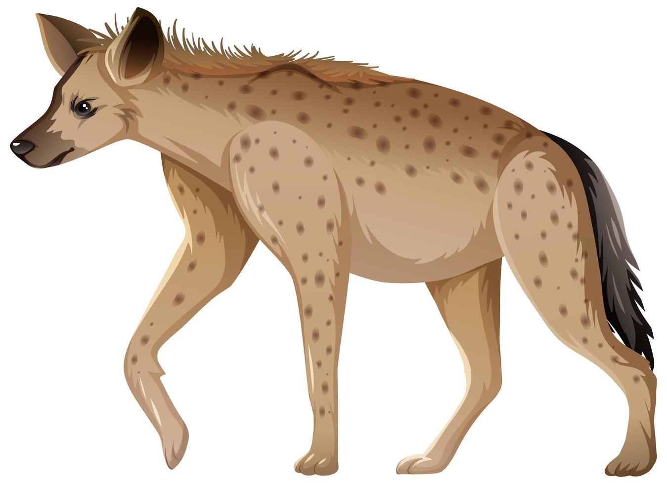 hyena dier op witte achtergrond vector