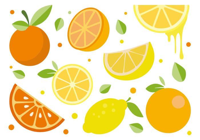 Gratis Citrus Fruit Vector