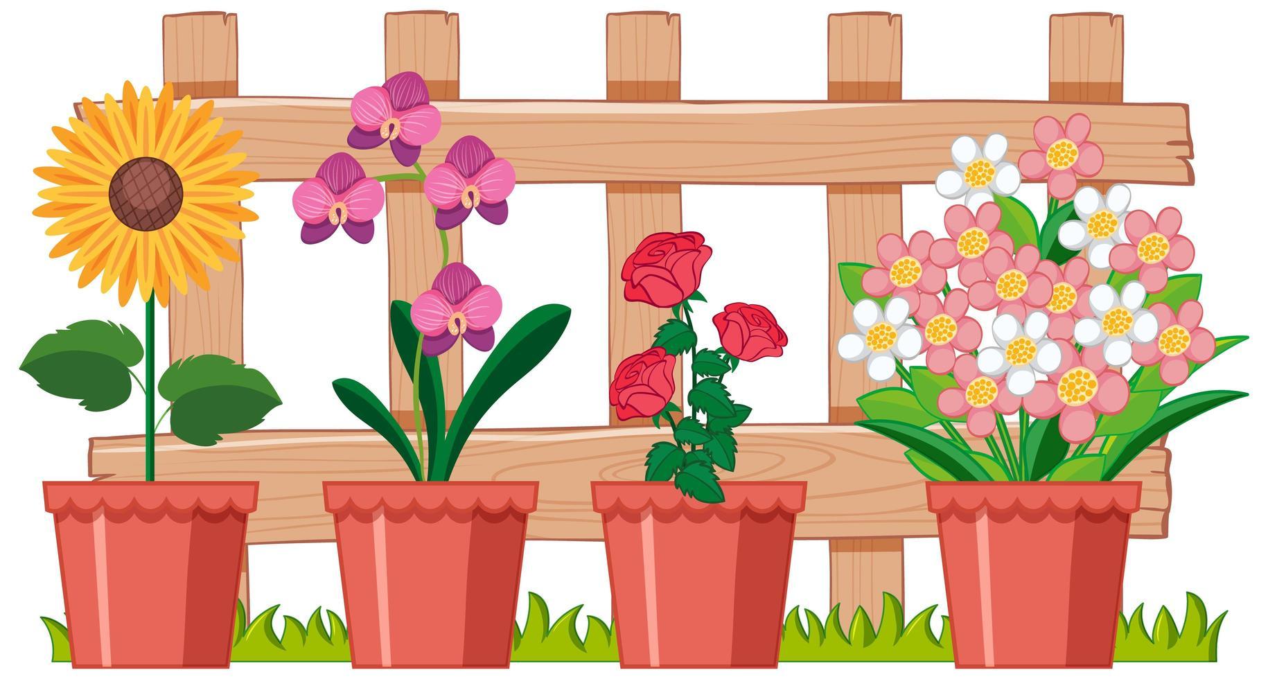 mooie bloem in de tuin op witte achtergrond vector