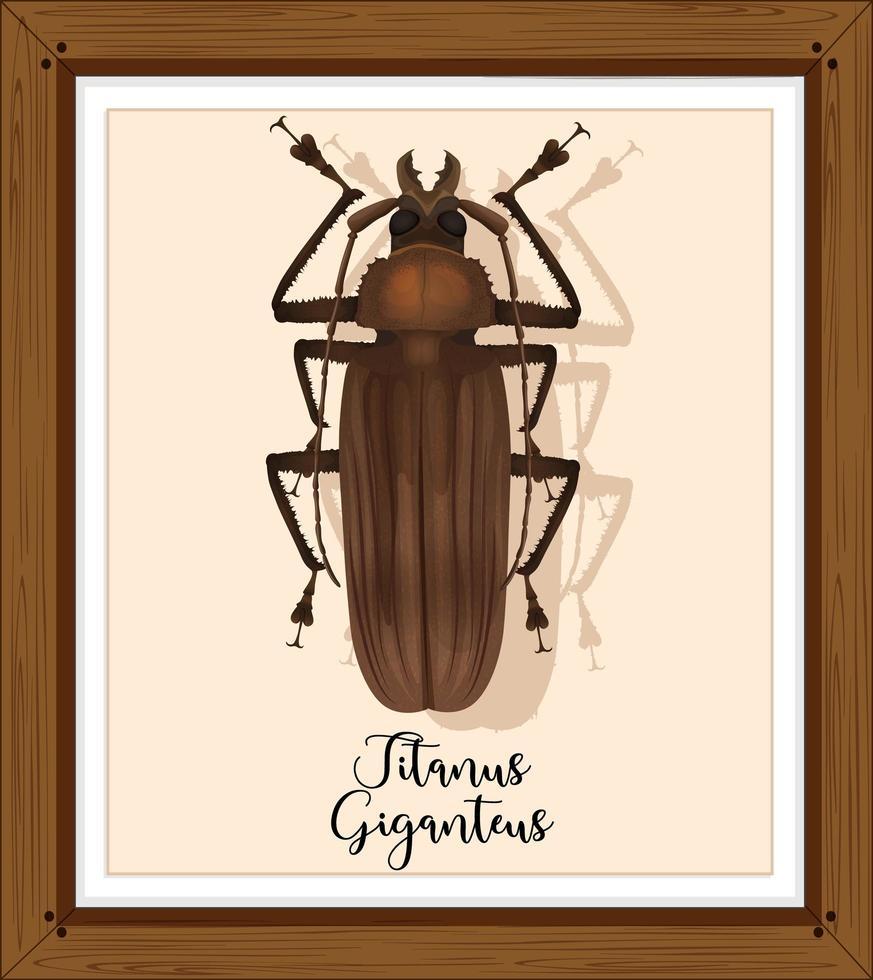 titanus giganteus op houten frame vector