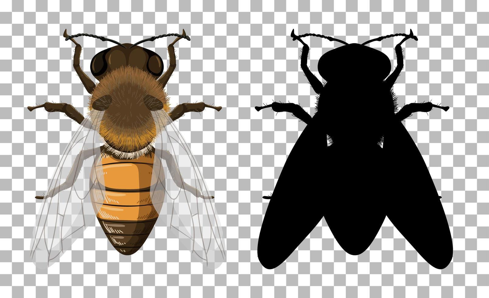 honingbij met zijn silhouet op transparante achtergrond vector